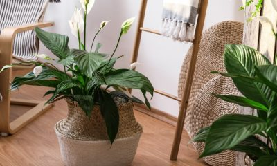 The Best Green Gifts Your Mom is Sure to Love | Electricity Company in Texas